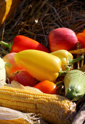 Autumn vegetables №47315