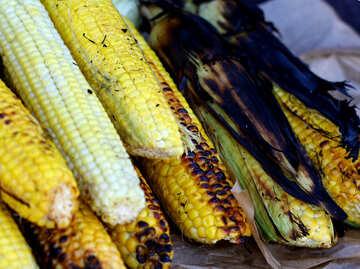 Corn grill maize №47484