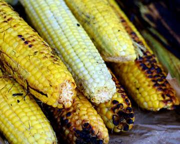 Corn grill maize №47486