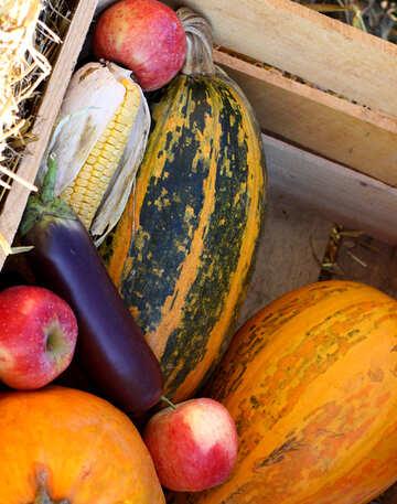 Pumpkins and fall vegetables №47333