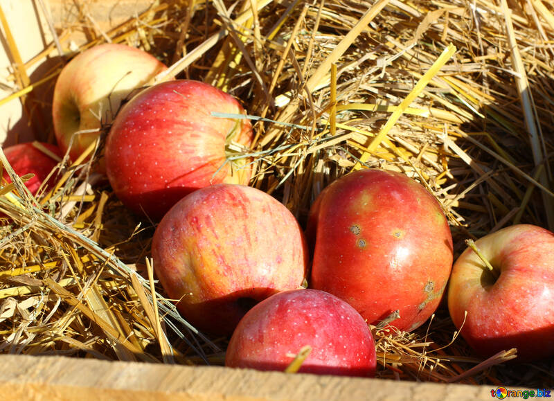 Natural apples in a wooden box on hay №47362