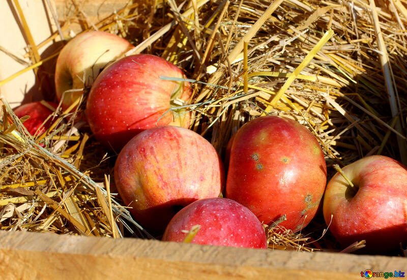 Natural apples in a wooden box on hay №47364