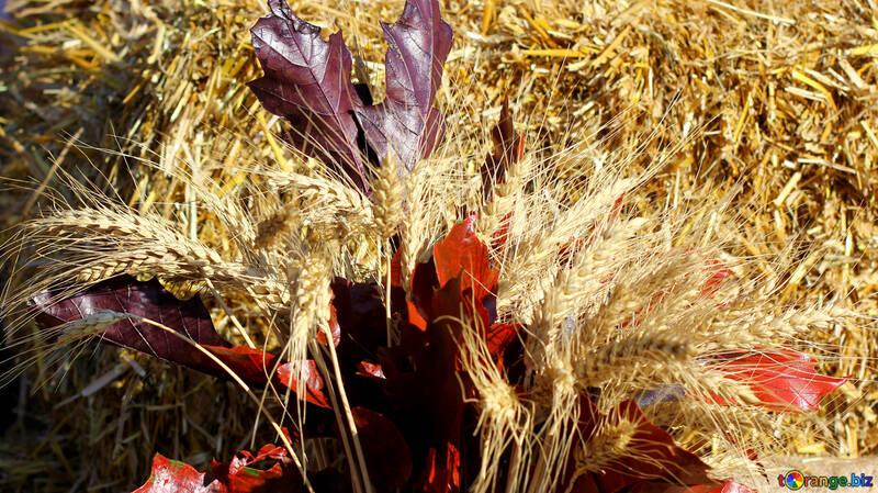 Fondo del otoño con espiguillas de pan №47378