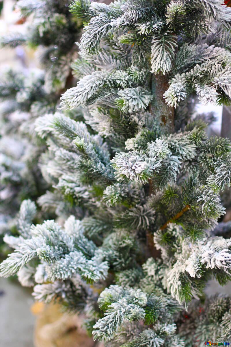 Árbol de Navidad en la tienda №47607