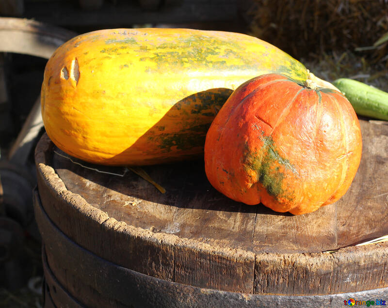 Pumpkins on a barrel №47332
