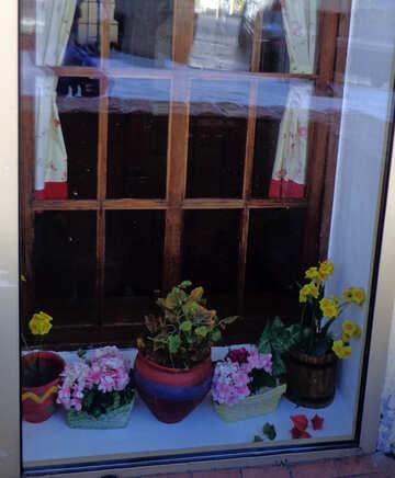 Flowers on the windowsill №48485