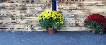 The texture of wooden wall and flowerpots №48385