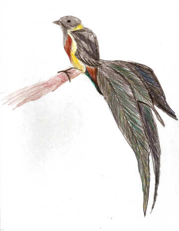 Children`s drawing bird black widow №48240