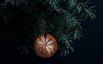 Fir tree branch isolated on black background with gold thread and a pin holds a glowing dry slice of orange, lemon, lime, mandarin or grapefruit  in top frame corner. New Year and Christmas blank template. Copyspace place for text.