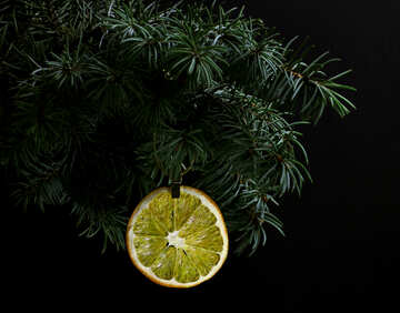 Fir tree branch isolated on black background with gold thread and a pin holds a glowing dry slice of orange, lemon, lime, mandarin or grapefruit  in top frame corner. New Year and Christmas blank template. Copyspace place for text. №48136