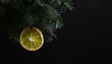 Fir tree branch isolated on black background with gold thread and a pin holds a glowing dry slice of orange, lemon, lime, mandarin or grapefruit  in top frame corner. New Year and Christmas blank template. Copyspace place for text. №48137