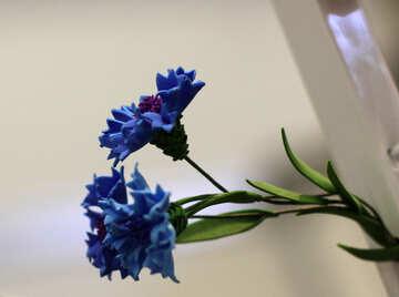 Cornflower flower of foamirana №48636