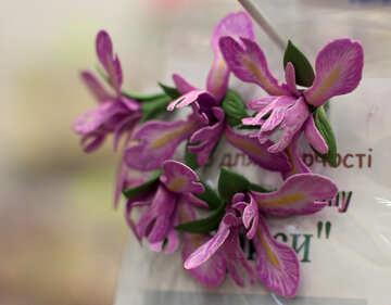 Iris flower of foamirana №48633