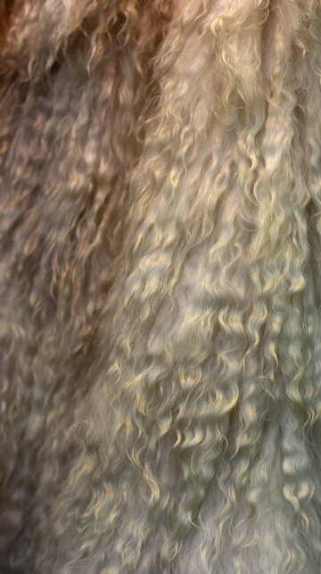 Natural wool №48949