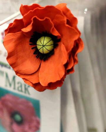 Poppy Flower of foamirana №48631