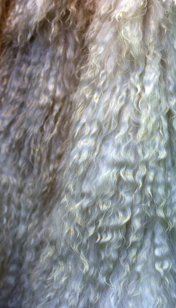 Natural wool №48950