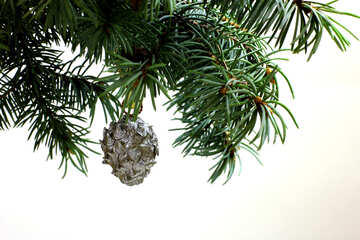 Fir tree branch isolated on white background with silver pine cone in top frame corner.  №48125