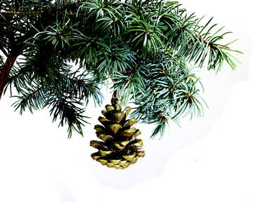 Fir tree branch isolated on white background with gold pine cone in top frame corner.  №48120