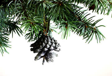 Fir tree branch isolated on white background with silver pine cone in top frame corner. №48124