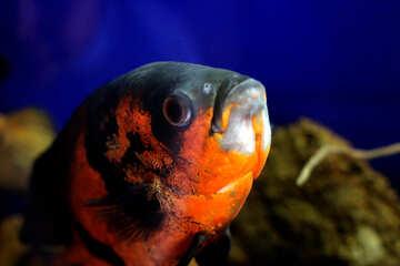 Most of the fish in the aquarium №48661