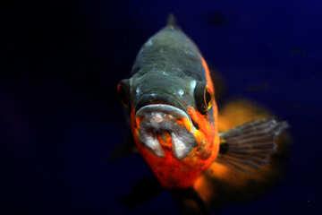 Most of the fish in the aquarium №48662