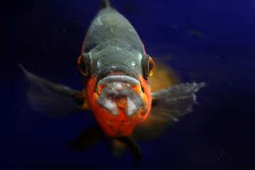 Most of the fish in the aquarium №48663