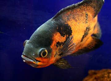 La maggior parte dei pesci in acquario №48665