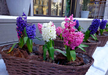 Decoration of the facade of the winter flowers hyacinth №48489