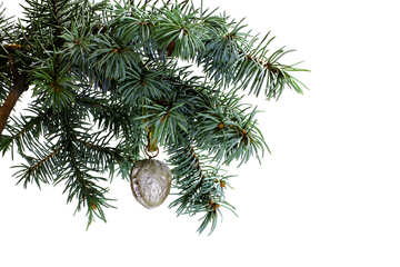 Fir tree branch isolated on white background with silver gold walnut in top frame corner. №48121