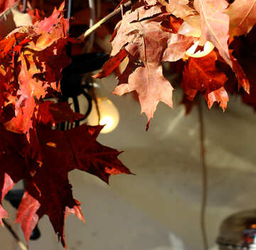 Decor with autumn leaves and bulbs №48394