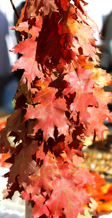 Decor with autumn leaves №48392