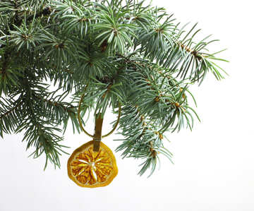 Fir tree branch isolated on white background with gold thread and a pin holds a glowing dry slice of orange, mandarin or lemons in top frame corner. New Year and Christmas blank template. Copyspace place for text. №48129