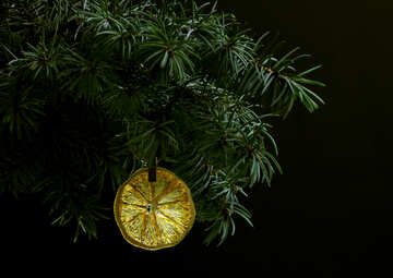 Fir tree branch isolated on black background with gold thread and a pin holds a glowing dry slice of orange, lemon, lime, mandarin or grapefruit  in top frame corner. New Year and Christmas blank template. Copyspace place for text. №48134