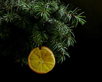 Fir tree branch isolated on black background with gold thread and a pin holds a glowing dry slice of orange, lemon, lime, mandarin or grapefruit  in top frame corner. New Year and Christmas blank template. Copyspace place for text. №48138