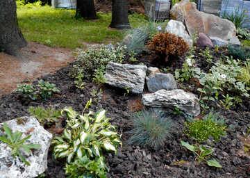 Plants on the stones №48473