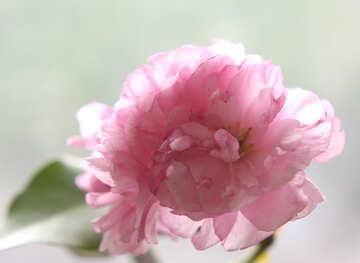 Sakura blossoms №48589