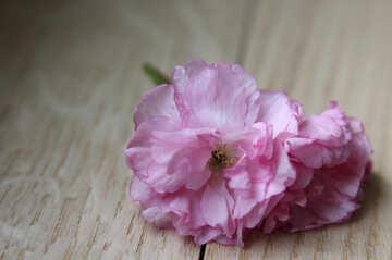 Sakura flower on a wooden background №48605