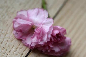 Sakura flowers on a background of wood №48615
