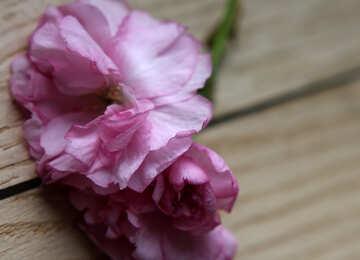 Sakura flowers on a background of wood