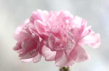 Sakura blossoms №48584