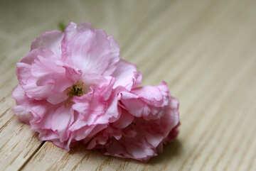 Sakura flower on a wooden background №48603