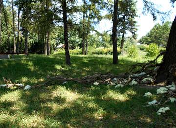 El paisaje alrededor del árbol para la sesión de fotos de la boda №48450