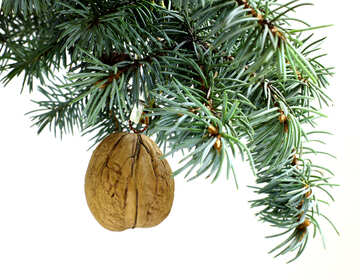 Fir tree branch isolated on white background with natural walnut in top frame corner. New Year and Christmas blank template. Big white copyspace place for text or logo. №48119
