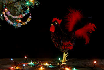 Red Rooster symbol of the year 2017 isolated on a black background №48014