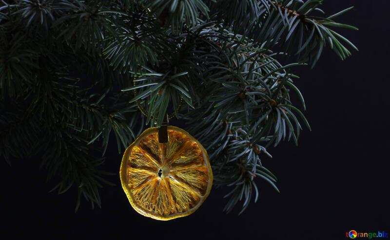 Еловая ветка дерева изолированно на черном фоне с золотой нитью  держит яркий сухой кусочек апельсина, лимона, мандарина в верхнем углу кадра. Новый год и Рождество пустой шаблон. Место для текста. №48132