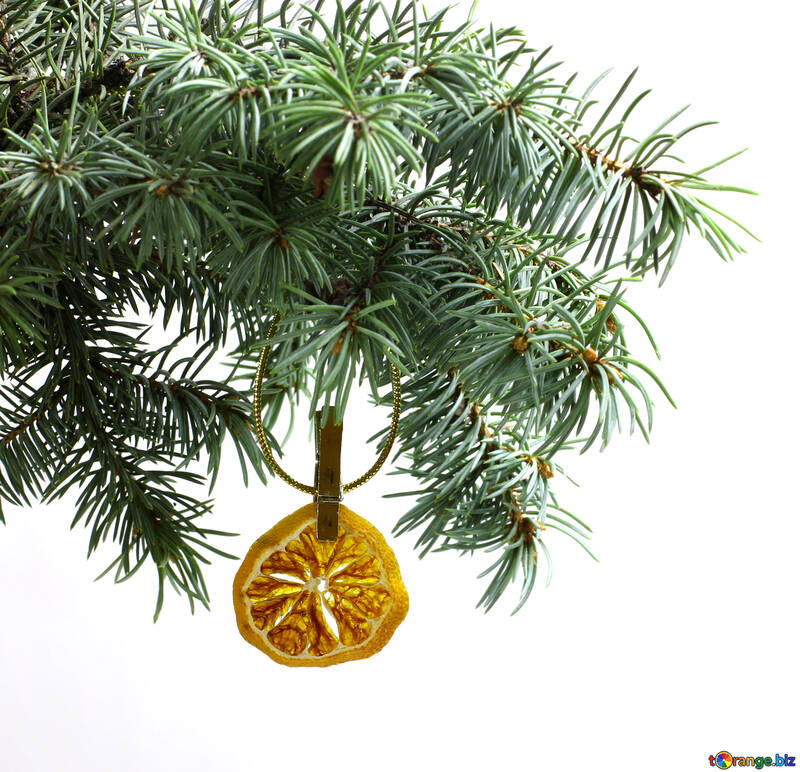 Fir tree branch isolated on white background with gold thread and a pin holds a glowing dry slice of orange, mandarin or lemons in top frame corner. New Year and Christmas blank template. Copyspace place for text. №48130