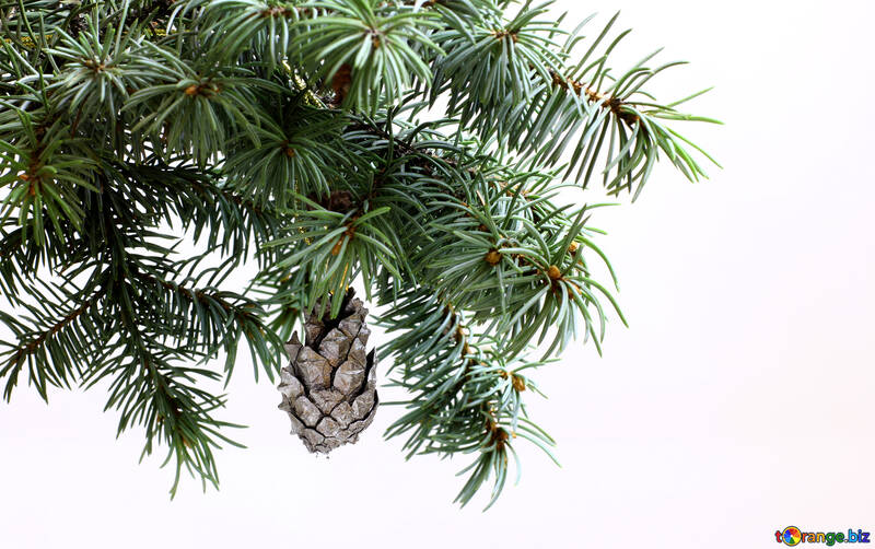 Fir tree branch isolated on white background with silver pine cone in top frame corner. New Year and Christmas blank template. Big white copyspace place for text or logo. №48114