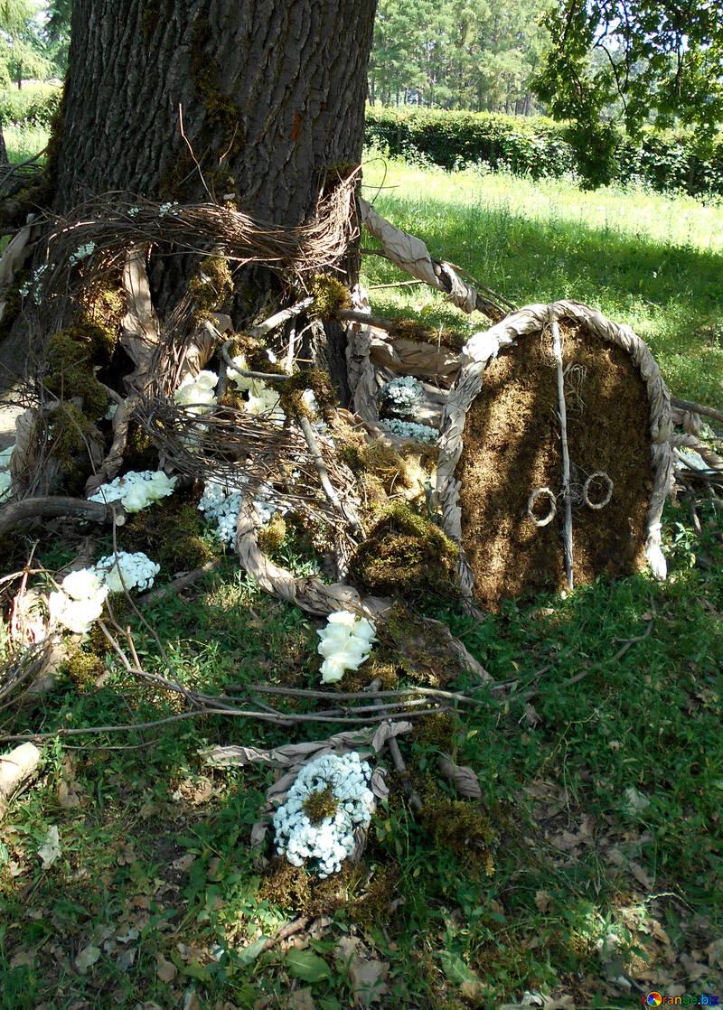 Le paysage autour de l`arbre pour la photo de mariage portes de shoot dans le trou №48451