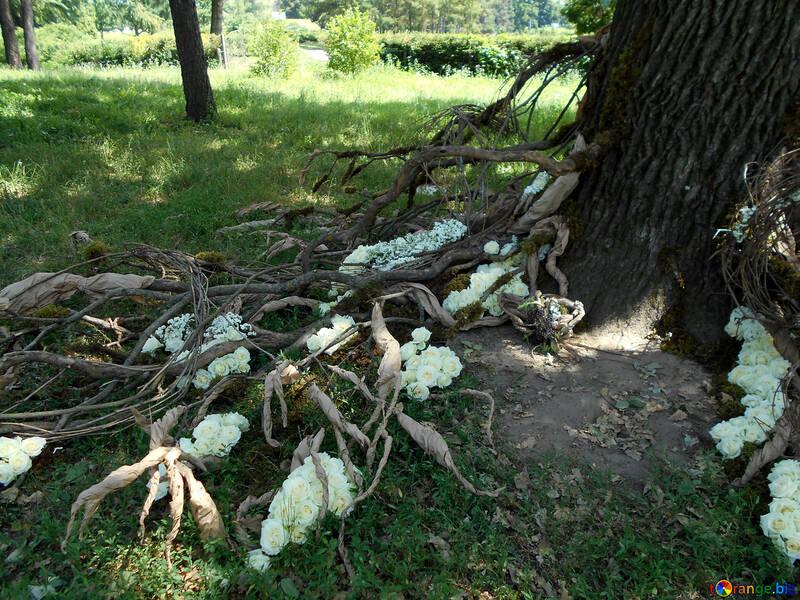 Le paysage autour de l`arbre pour la photo de mariage shoot №48453