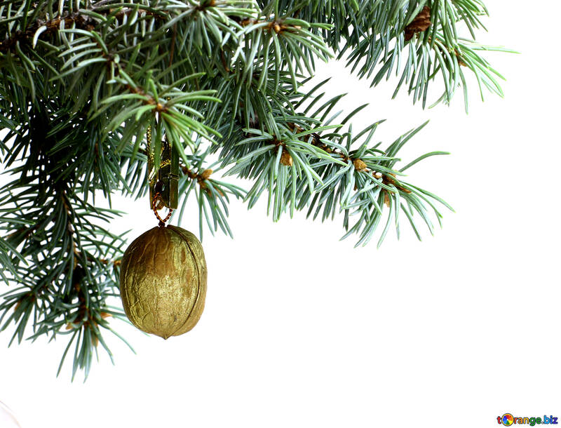 Nüsse tanne zweig auf weißem hintergrund mit gold nussbaum in oberen ...